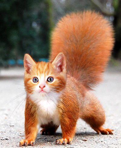 забавные животные - белка-кот.