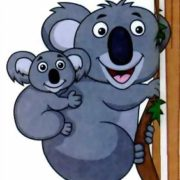 Правда, что коала - это медведь