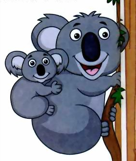 Про коалу