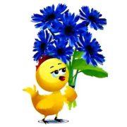 Что за цветок – василек?