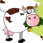 смешные картинки - корова
