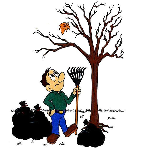 Правда, что листья работают без отдыха?