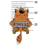 Как самостоятельно посчитать «человеческий» возраст кошки