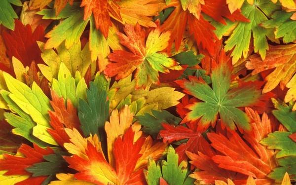 Почему осенние листья меняют цвет
