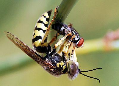 укусила пчела или оса