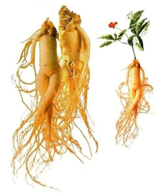 Картинка - женьшень «человек-корень»