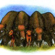 Зубр животное - рисунок