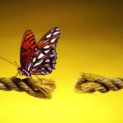 Миграции бабочек