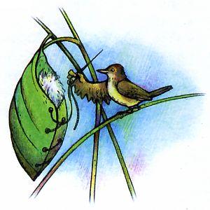 Славка птица фото